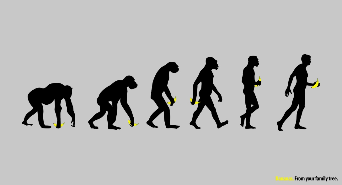 advertising concept for bananas - evolution