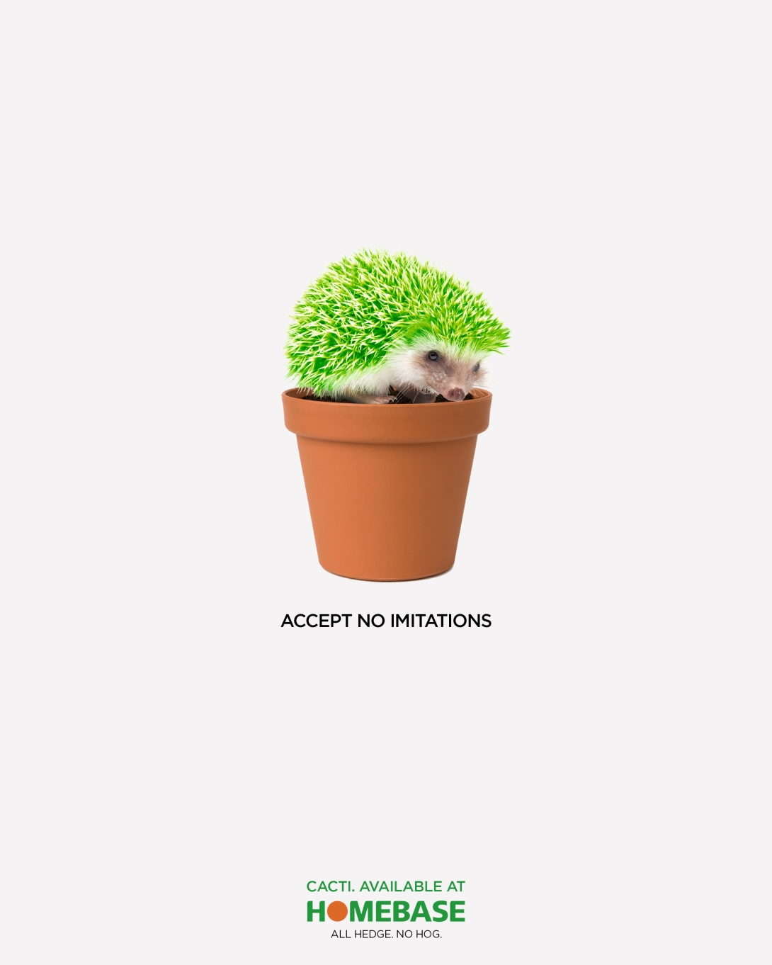 an advertising concept for a cacti retailer