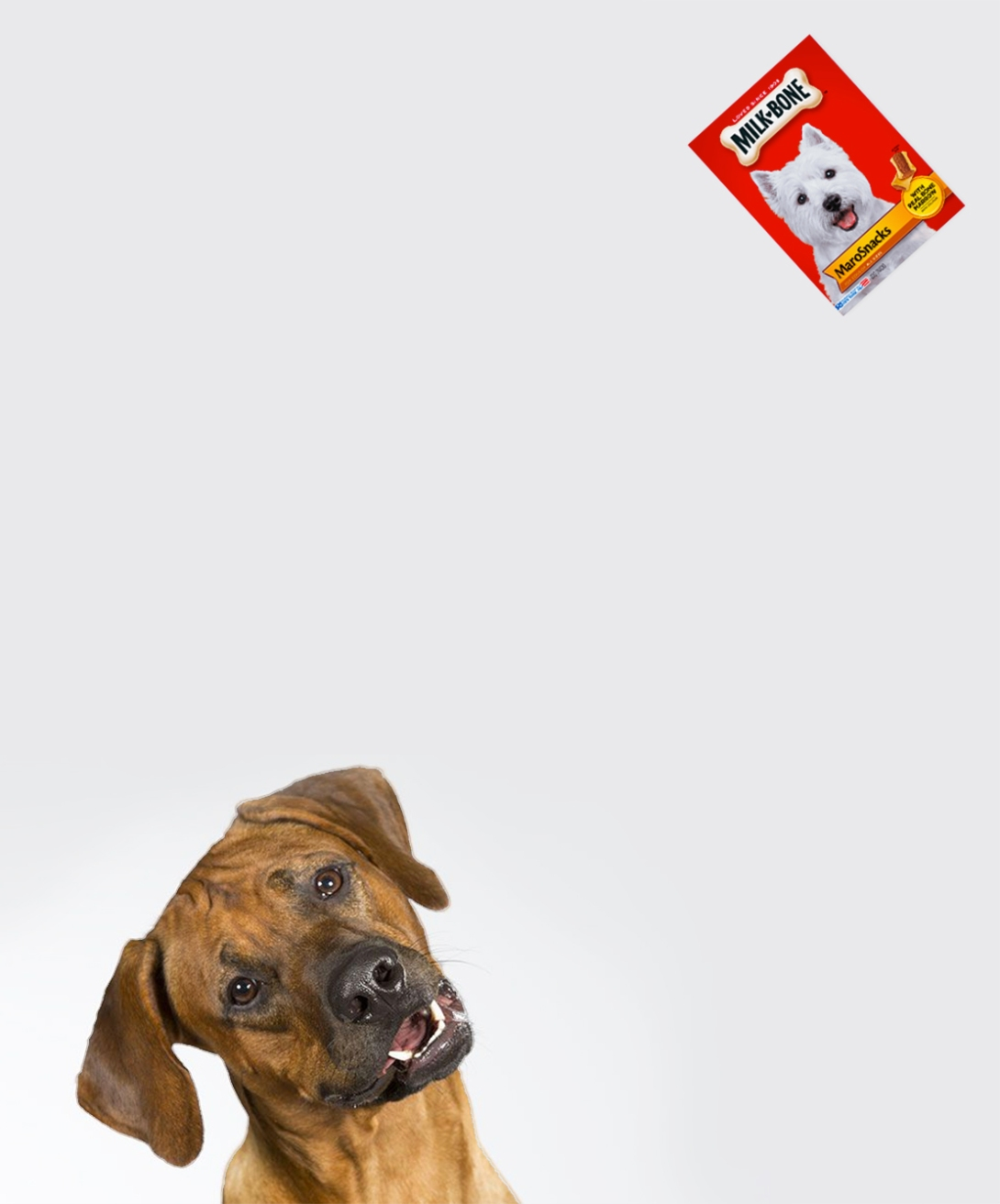 A rough advertising idea for a dog biscuits brand - cocked head