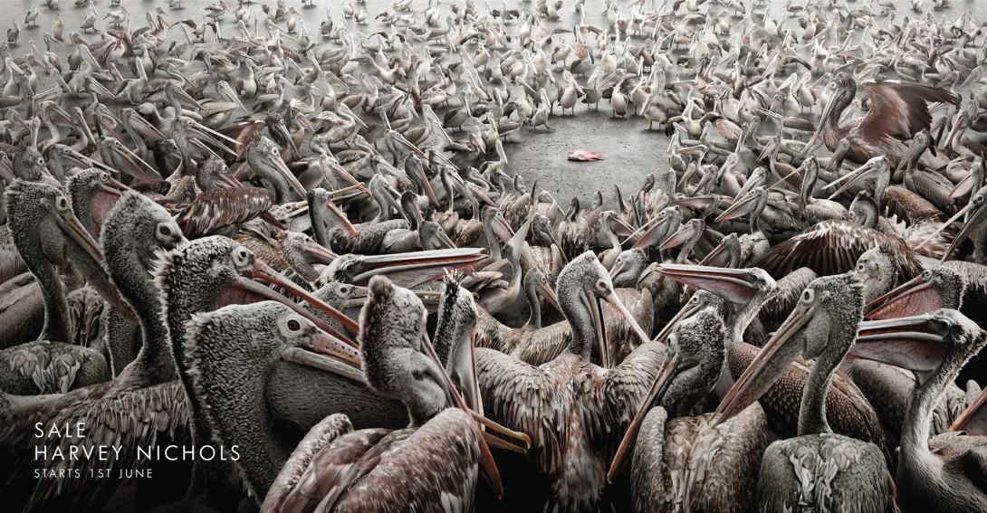 harvey_nichols_pelicans_1