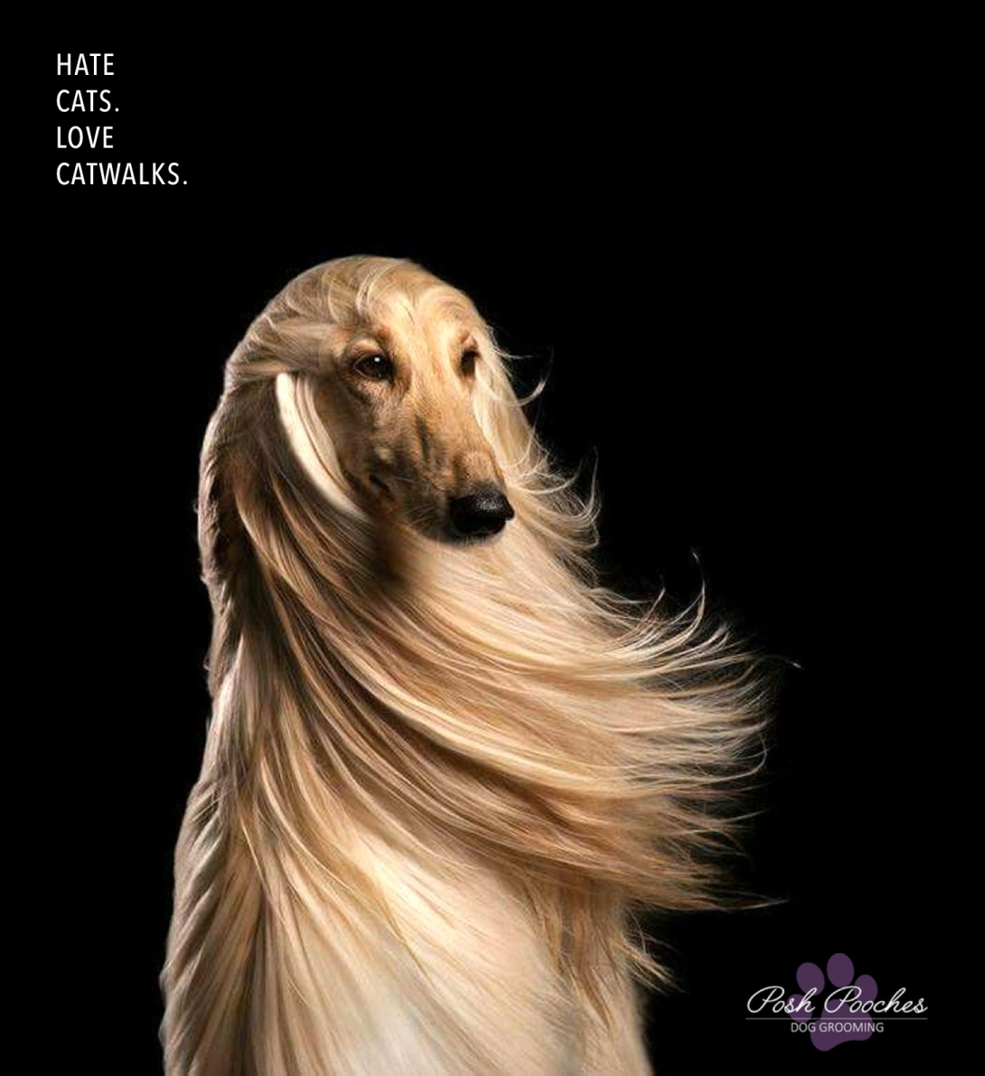 Ad concept for a pedigree dog grooming company